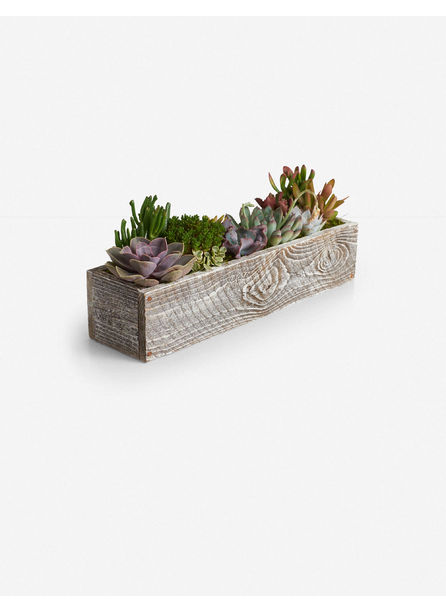 Kimberlee Wood Rectangle Planter with Succulents, White