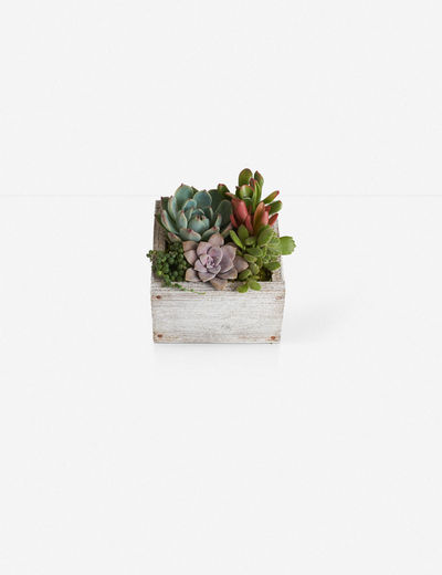 Kimberlee Wood Square Planter with Succulents, White